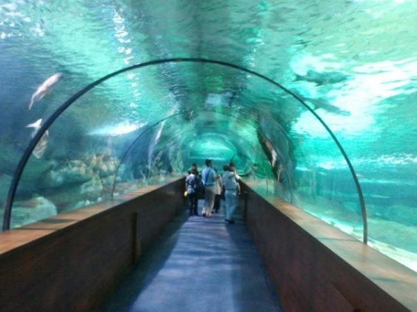 Океанариумы в Турции Аква-Вега 2