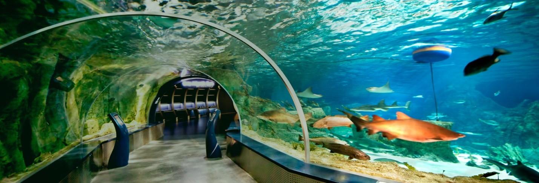 Океанариумы в Турции Istanbul Akvaryum